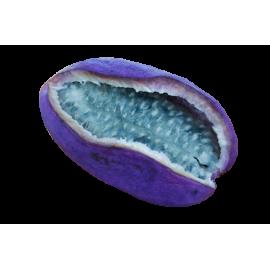Акебия